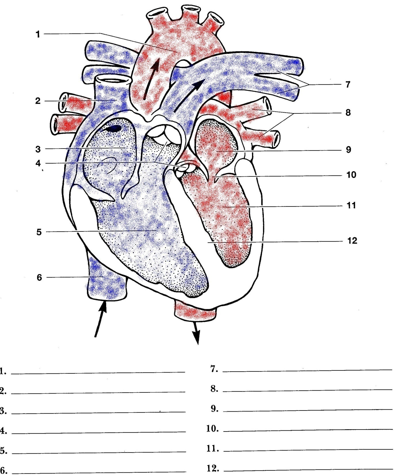 Play additionally  further Anatomy additionally Skull Diagrams further Body Parts Esl. on tooth labeling exercises